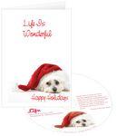 Custom Dog's Life Holiday Greeting Card w/ Matching CD