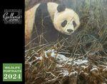 Custom Galleria Wall Calendar 2018 Wildlife Portraits (Low Price )
