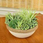 Custom Succulent