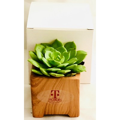 Succulent in Wood Grain Pot