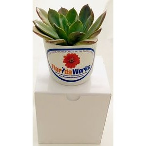 Assorted Succulents in White Plastic Pot
