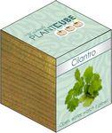 Custom Plant Cube- Cilantro