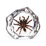 Custom Lucite Paperweights with Real Tarantulas, 4.45
