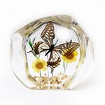 Custom Lucite Paperweight with Real Butterfly, 4.45 x 3.86 x 0.98