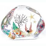 Custom Lucite Paperweights with Real Sea Life, 2.91