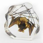 Custom Lucite Paperweights with Real Bat, 7 x 6.6 x 1.4