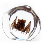 Custom Lucite Paperweights with Real Bat, 4.45