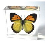 Custom Lucite Paperweight with Real Butterfly, 2.95 x 2.95 x 0.94