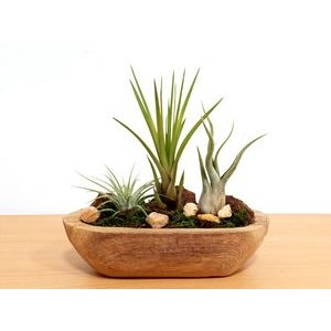Driftwood Garden With Air Plants