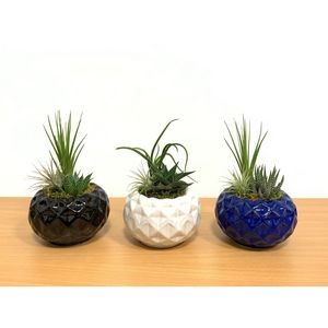 Geodesic Ball Vase Air Plant or Succulent Plant