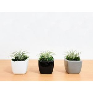 "White or Gray Vase Air Plant or Succulent Plant (2""x2"")"