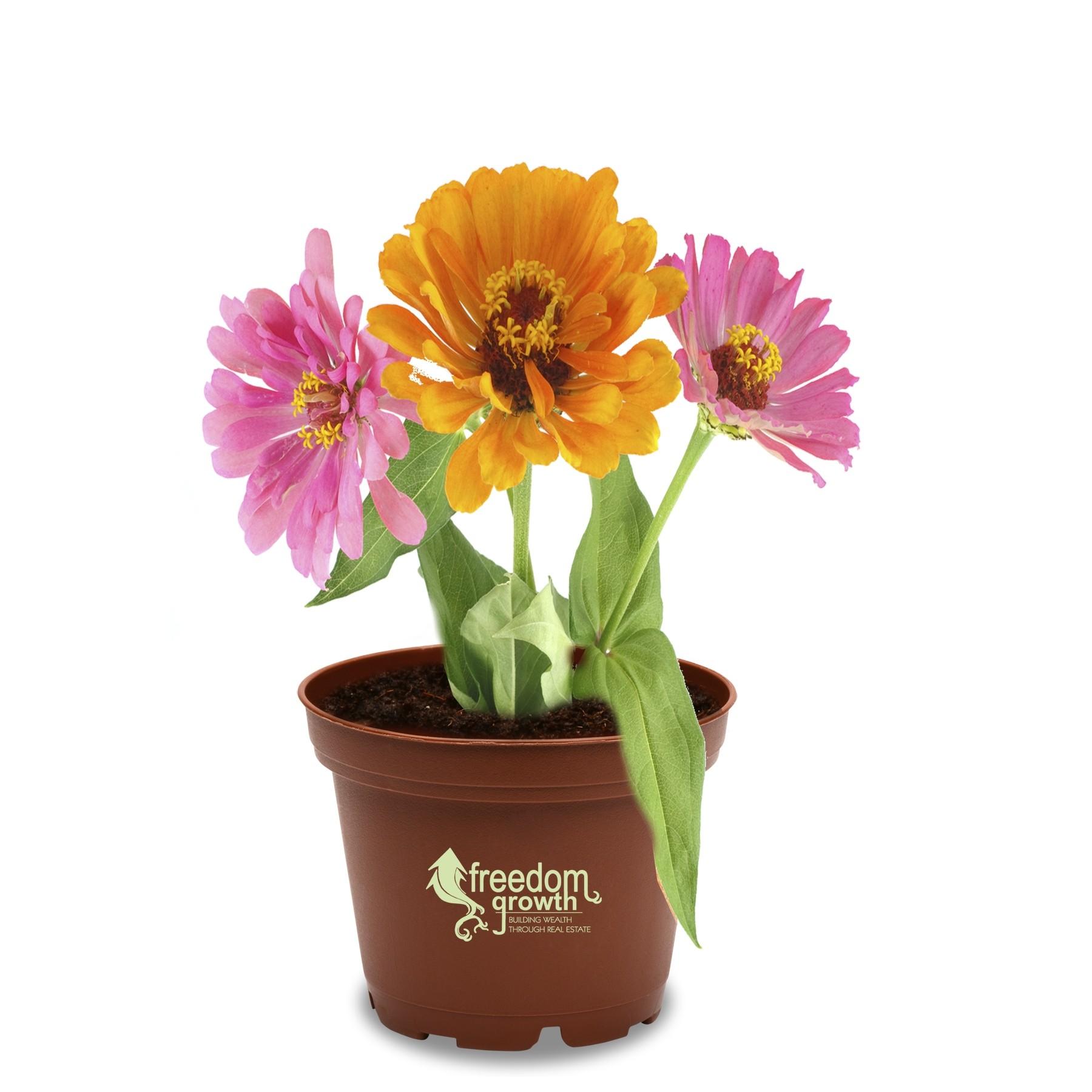 logo flower pot planting kit