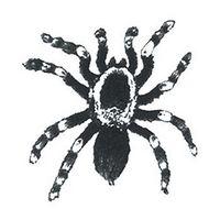 Small Tarantula Temporary Tattoo