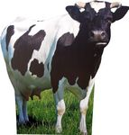 Custom Cow Animal Cardboard Cutout Stand Up| Standee Picture Poster Photo Print
