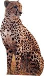 Custom Cheetah Animal Cardboard Cutout Stand Up| Standee Picture Poster Photo Print