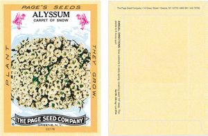 Antique Series Alyssum, Carpet of Snow Flower Seeds - Digital Print/Back Packet Print