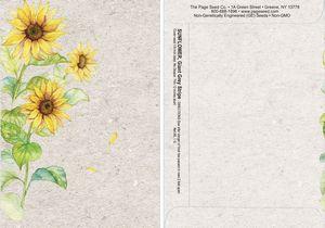 Watercolor Series Sunflower Seed Packet - Digital Print /Packet Back Imprint