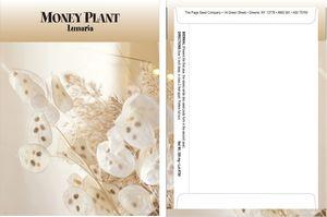 Standard Series Money Plant Seed Packet - Digital Print /Packet Back Imprint
