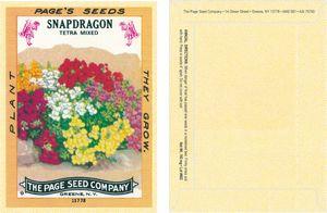 Antique Series Snapdragon Flower Seeds - Digital Print/ Packet Back Imprint