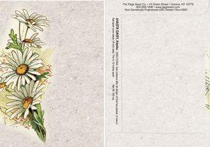 Watercolor Series Daisy Seed Packet - Digital Print/Packet Back Imprint