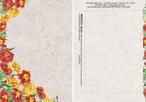 Watercolor Series Marigold Sparky Seed Packet - Digital Print /Packet Back Imprint