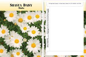 Standard Series Daisy Seed Packet - Digital Print/Packet Back Imprint