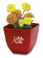 Sprout Tyme Bamboo Planter