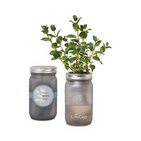 Modern Sprout Indoor Herb Garden Kit - Ice Blue
