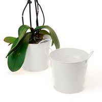 "6 1/2"" White Painted Pail w/Dual Side Handle"