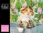 Custom Galleria Wall Calendar 2019 Kittens (Low Price )