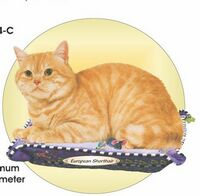 European Shorthair Cat Acrylic Coaster w/ Felt Back