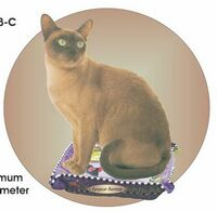 European Burmese Cat Acrylic Coaster w/ Felt Back