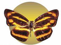Brown & Yellow Butterfly Acrylic Coaster w/ Felt Back