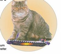 Exotic Shorthair Cat Acrylic Coaster w/ Felt Back