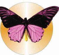 Black & Purple Butterfly Acrylic Coaster w/ Felt Back