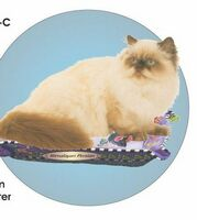 Himalayan Persian Cat Acrylic Coaster w/ Felt Back