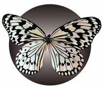 Black & White Butterfly Acrylic Coaster w/ Felt Back