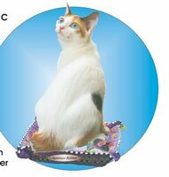 Japanese Bobtail Cat Acrylic Coaster w/ Felt Back