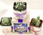 Custom Assorted Cactus in Pot