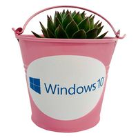 Assorted Succulents in Pink Metal Pail