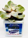 Custom Succulent in Square Ceramic White Pot