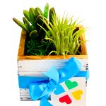 Custom Assorted Succulents in Whitewashed Square Wood Box