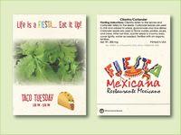 Cilantro/Coriander Herb Seed Packet