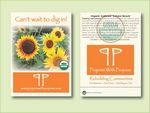 Custom Organic Sunflower Autumn Beauty Seed Packet