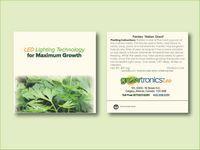 "Parsley 'Italian Giant' Herb Seed Packet (3.25""x 3.25"")"