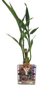 Custom Printed Bamboo Plants