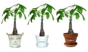 Custom Printed Tropical Plants